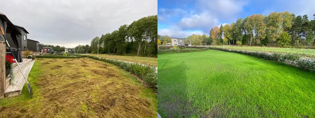 Before and after lawn restoration service